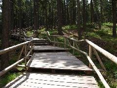 7.6.2008 Přístupový chodník na vrchol Boubína [autor: Pavel Vondrášek]