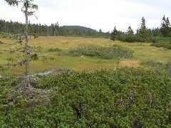 26.8.2004 Výhled r rozhledny na Černohorské rašeliniště, v pozadí hora Světlá (1244 m n.m.) [autor: Eva Kohlíčková]