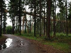 3.9.2012 Stezka korunami stromů přechází nad cestou [autor: Pavel Vondrášek]