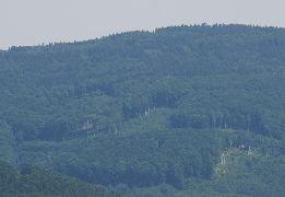 6.7.2012 Pohled z rozhledny na Velký Lopeník [autor: Petr Kohl]